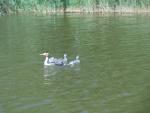 Egretts
