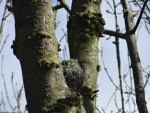 Long tailed tit nest